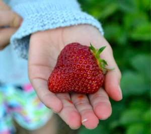 Strawberry Jackpot - Lori's Getting to Yum story